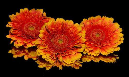 A trio of flower heads.